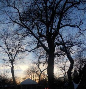 2011_Winter_Evening_Garden_Walk_cropped