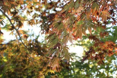 Jay_Sekhar_Autumn_Color