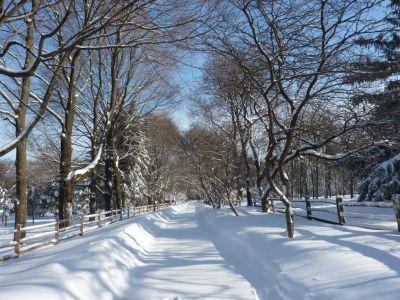 winter_wonderland2_smaller